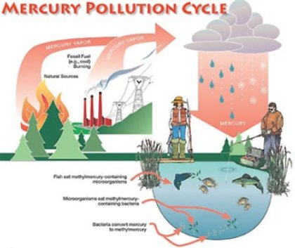 mercury lifecycle chart